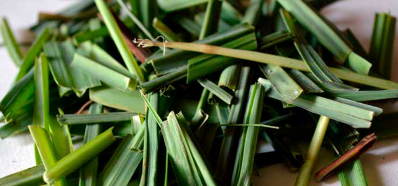 Cómo purificar tu organismo con lemongrass